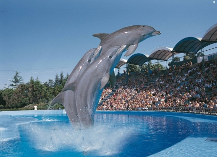The Aquapark Marineland